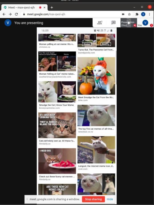 Cat memes in Google meet via screen sharing a scrcpy window